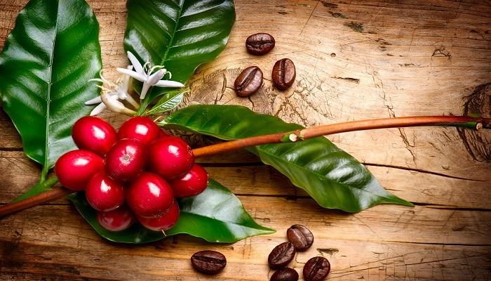 Café biodinámico